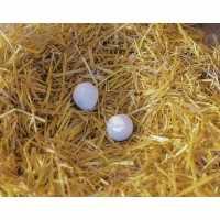 Œufs de poule en argile